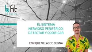 Sistema nervioso periférico: detectar y codificar