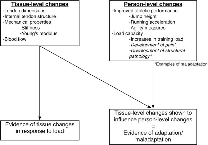 teorias adaptacion